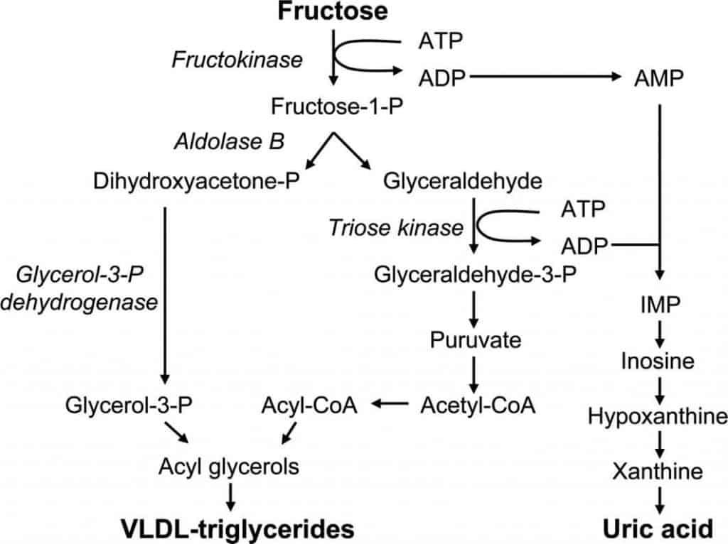 metabolizarea-fructozei-excesul-de-fructe