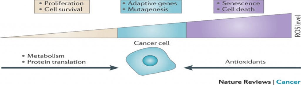antioxidants-cancer-nature-review-metabolism